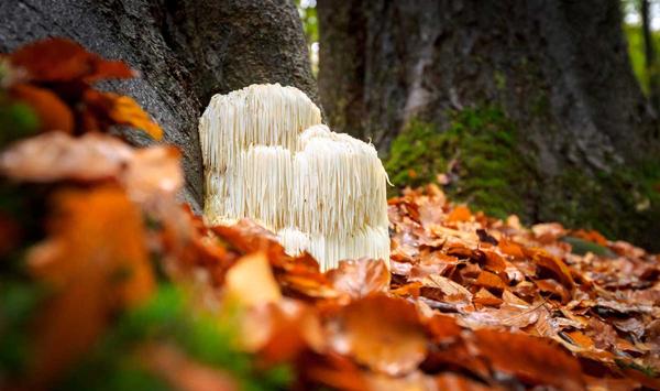 A-Truly-Magic-Mushroom
