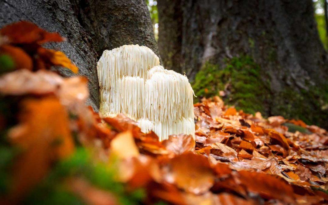 A Truly Magic Mushroom
